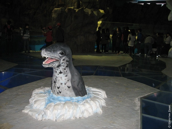 Павильон с пингвинами, морскими котиками и моржами